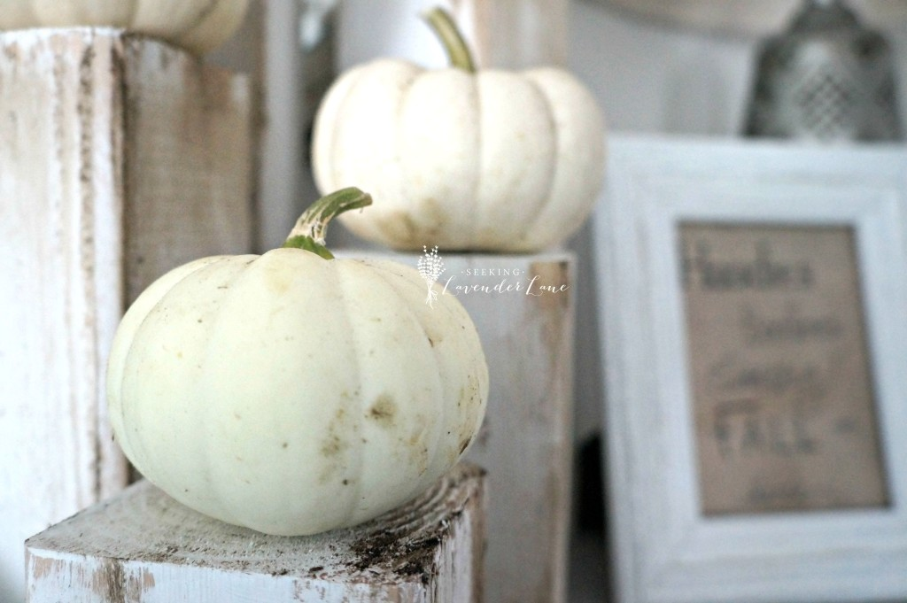 White pumpkins display