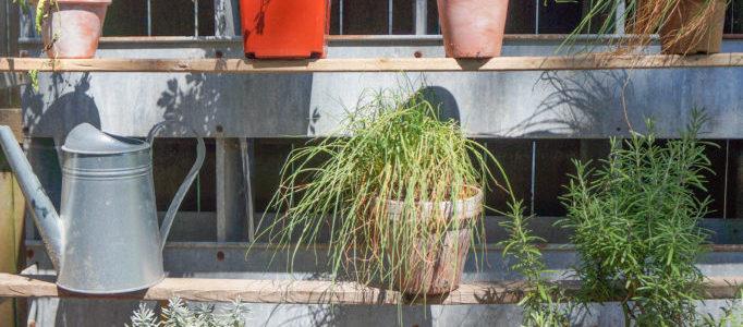 Vintage Herb Garden